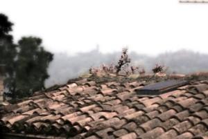 Ca Borgo Vecchio-News  (3)
